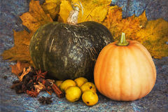 Harvested pumpkins with fall leaves Stock Photography
