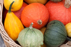 Harvested pumpkins Royalty Free Stock Image