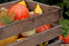 Harvested pumpkins Royalty Free Stock Images