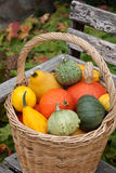 Harvested pumpkins Stock Image