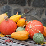 Harvested pumpkins Stock Photo