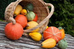 Harvested pumpkins Stock Photos