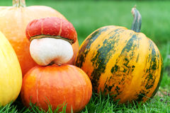 Harvested pumpkins outdoors Royalty Free Stock Photos