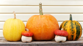 Harvested pumpkins outdoors Royalty Free Stock Photography
