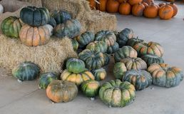 Harvested pumpkins at a pumpkin patch, Gainesville, GA, USA. Harvested pumpkins at a pumpkin patch awaiting their selection, Gainesville, Georgia, USA royalty free stock images