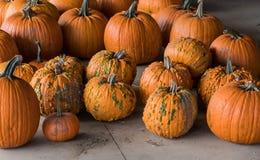 Harvested pumpkins from a pumpkin patch, Gainesville, GA, USA stock photo