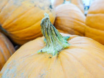 Harvested pumpkins in store Royalty Free Stock Image