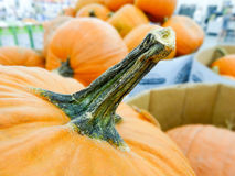 Harvested pumpkins in store Stock Photo