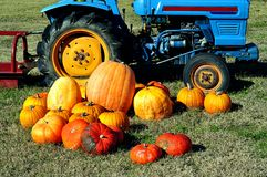 Harvested Pumpkins And Tractor Royalty Free Stock Photos