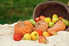 Harvested Pumpkins With Fall Leaves Stock Image