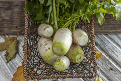Harvested radishes in small basket. A close up concept image of chinese radishes in a basket Royalty Free Stock Images