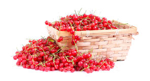 Harvested red currant Royalty Free Stock Image