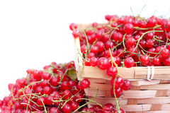 Harvested red currant Stock Photography