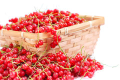 Harvested red currant Stock Photo