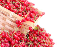 Harvested red currant Royalty Free Stock Photography