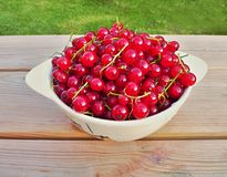 Harvested red riped currant Royalty Free Stock Photos