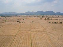 Harvested rice field. Royalty Free Stock Photography