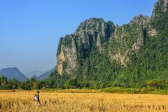 Harvested rice field surrounded by rock formations in Vang Vieng Stock Photo