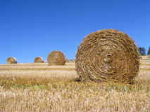 Harvested Rolls of Straw stock images