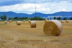 Harvested straw field with round dry hay bales in front of mountain range royalty free stock image
