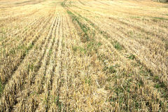 Harvested stubble fields Royalty Free Stock Images