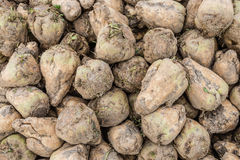 Harvested sugar beets from close Royalty Free Stock Photos
