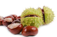 Harvested sweet chestnuts Royalty Free Stock Image