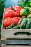 Harvested tomatoes and cucumbers Stock Photo