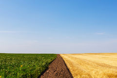 Harvested and unharvested wheat and sunflower fields. royalty free stock images