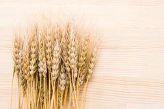 Harvested wheat ears Royalty Free Stock Image