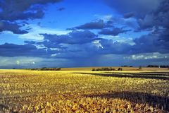 Wheat Field after harvest, with setting sun. stock photos