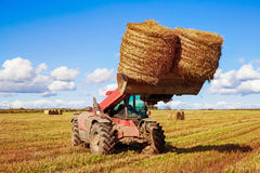 Harvested  wheat field Royalty Free Stock Image