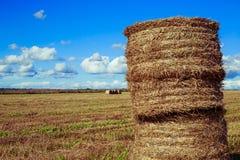 Harvested  wheat field Stock Photos