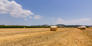 Harvested wheat field with balls of straw Stock Image