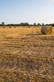 Harvested wheat field. Bundles of straw alined in a raws Stock Images