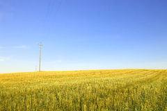 Harvested wheat field and electric power line. Stock Images