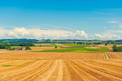 Harvested wheat field Royalty Free Stock Photo