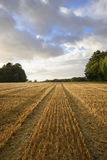 Harvested wheat field in evening sunlight Stock Photography