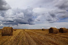 Harvested wheat field with hay rolls on the background of a stor Royalty Free Stock Photos