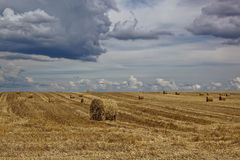 Harvested wheat field with hay rolls. Royalty Free Stock Photos