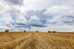 Harvested wheat field with hay rolls on of a stormy sky. Royalty Free Stock Photo