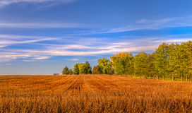 Harvested Wheat Field in Indian Summer Royalty Free Stock Photos