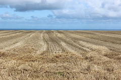 Harvested wheat field on the ocean Stock Photos