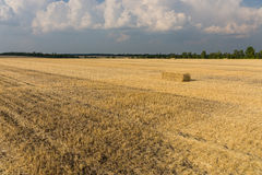 Harvested wheat field Royalty Free Stock Photos