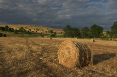 A harvested wheat field with a round  straw bales Stock Images