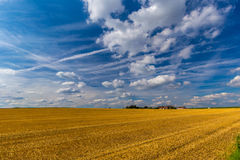 Harvested wheat fields and dramatic blue sky in July, Belgium Stock Photo