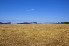 Harvested wheat fields Royalty Free Stock Photography