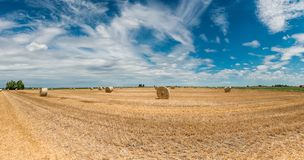 Harvested wheat fields royalty free stock photos