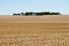 Harvested Wheat Fields. Western Australia Stock Photos