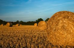 Free Harvested Wheat Fields In Barkway Royalty Free Stock Images - 131415249